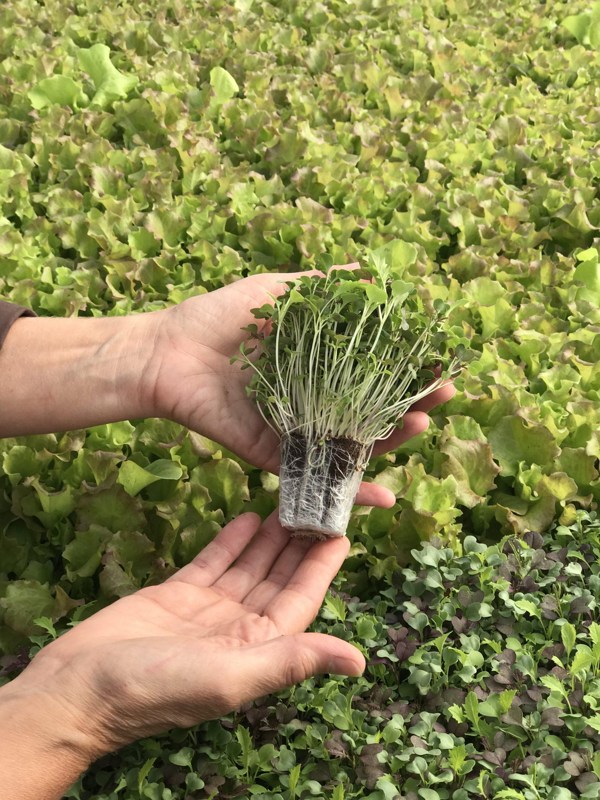 preforma hydroponics jiffy