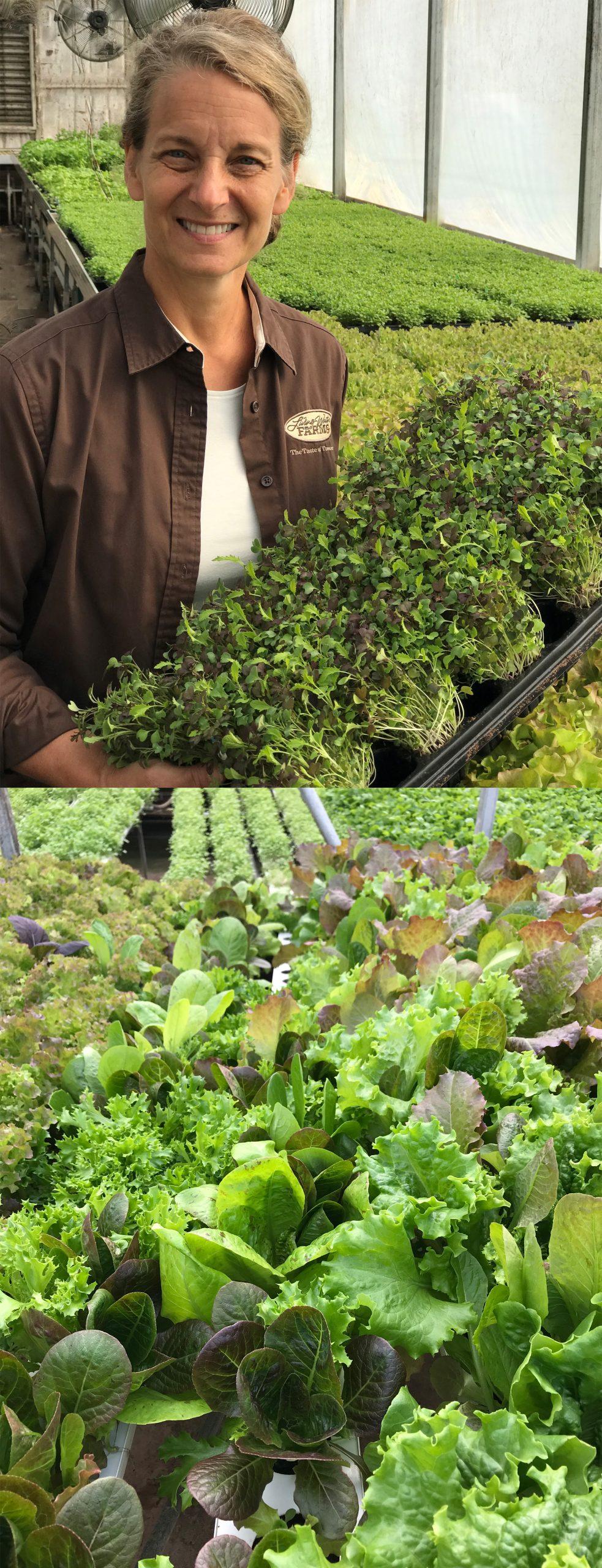 lettuce hydroponic preforma