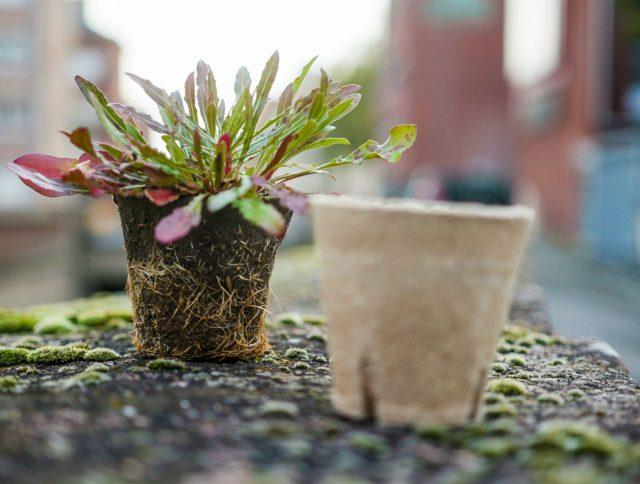 Jiffy Pot nursery perennials